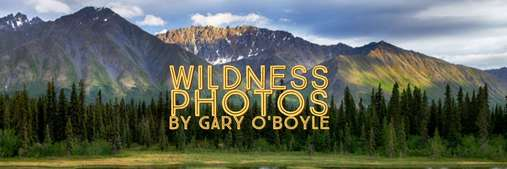 Wildness Photos by Gary O'Boyle
